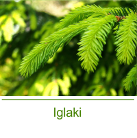 blog_gardenflora_iglaki.png